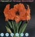hippeastrum-orange souvereign.jpg